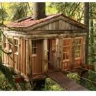 Tree House Design