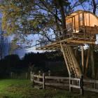 Tree House Night View With Lighting