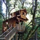 Two Floors Tree House