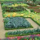 Vegetable Garden Bed Decor Ideas