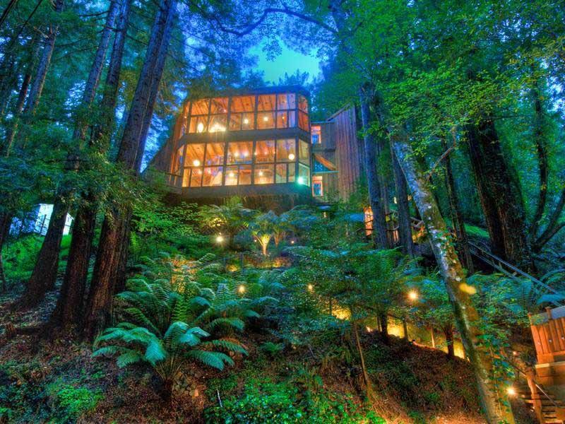 Amazing Lighting Photo of Luxury Tree Houses